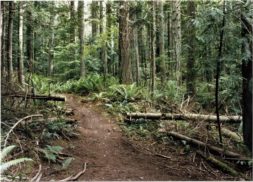 The Anacortes Community Forest Lands include over 50 miles of mixed-use trails. Photograph credit: Skagit Land Trust staff.