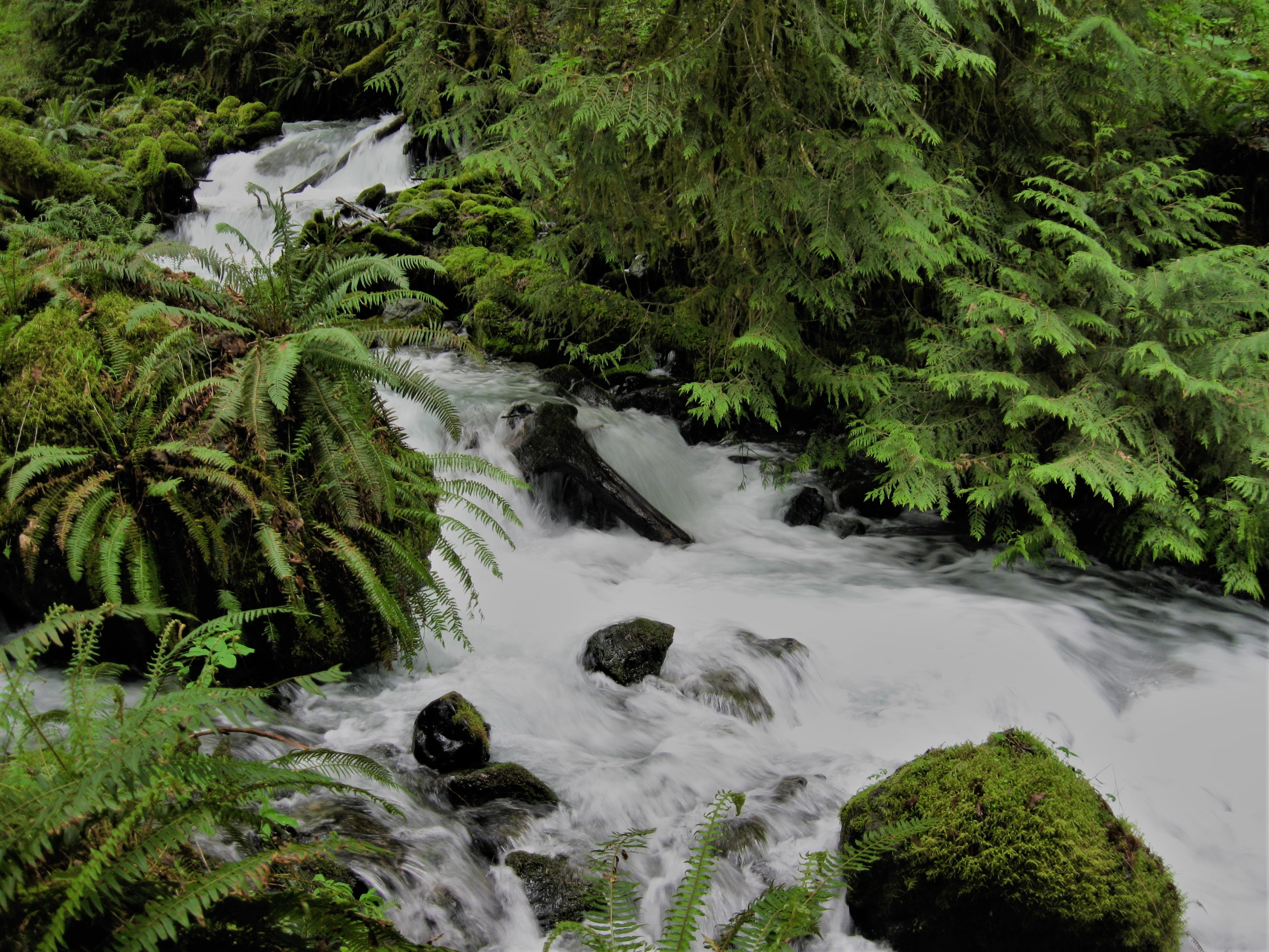 Less than a mile from the parking area, Barr Creek cascades through lowland forests. Photograph credit: Skagit Land Trust staff.