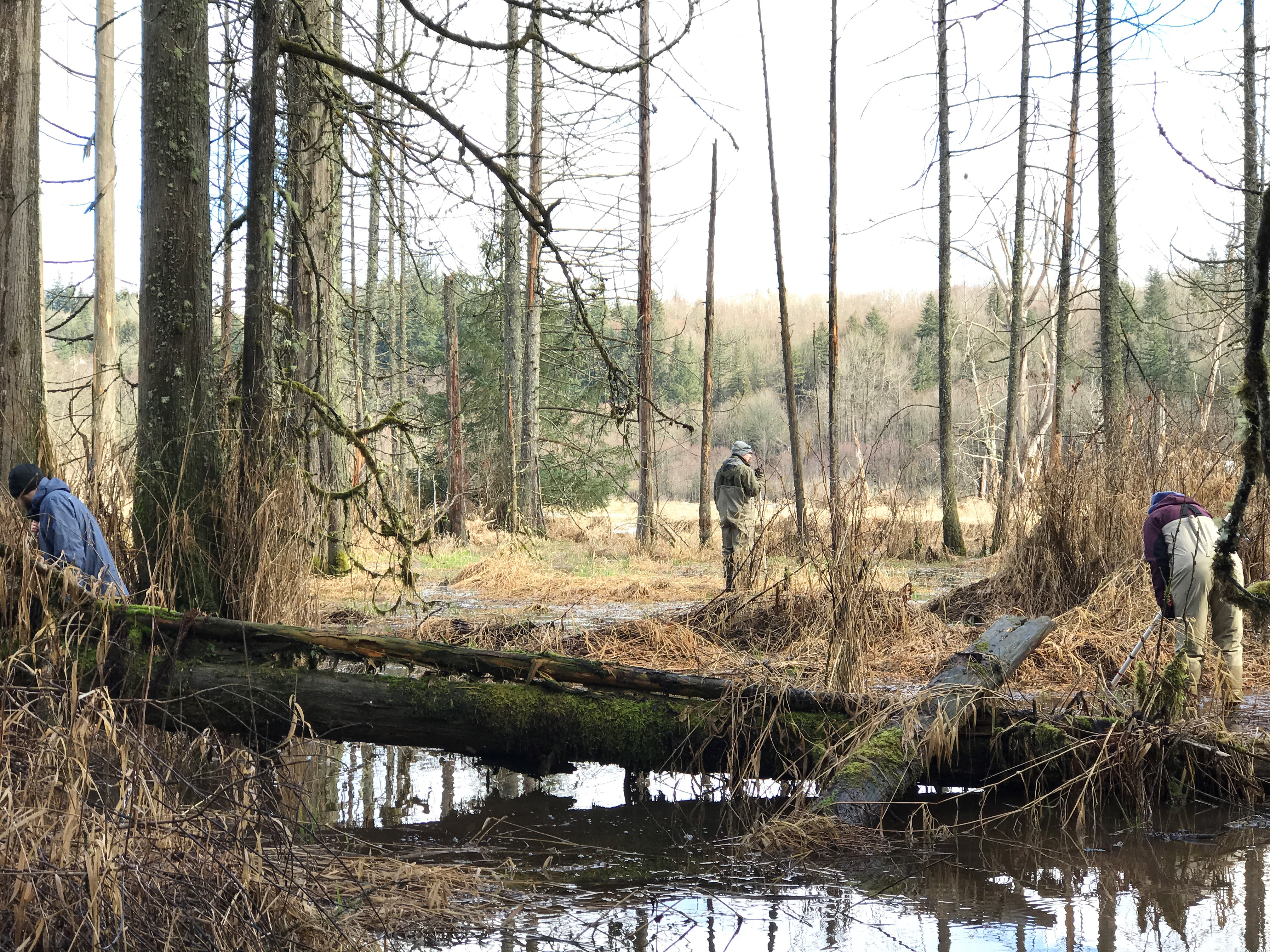 Volunteers measure water quality and biological diversity during an amphibian monitoring citizen science project at Big Lake Wetlands Conservation Area, March 2018. Photograph credit: Skagit Land Trust staff.