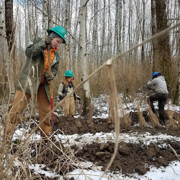 EarthCorps crew works on a restoration project during February of 2018. Photograph credit: Skagit Land Trust staff.