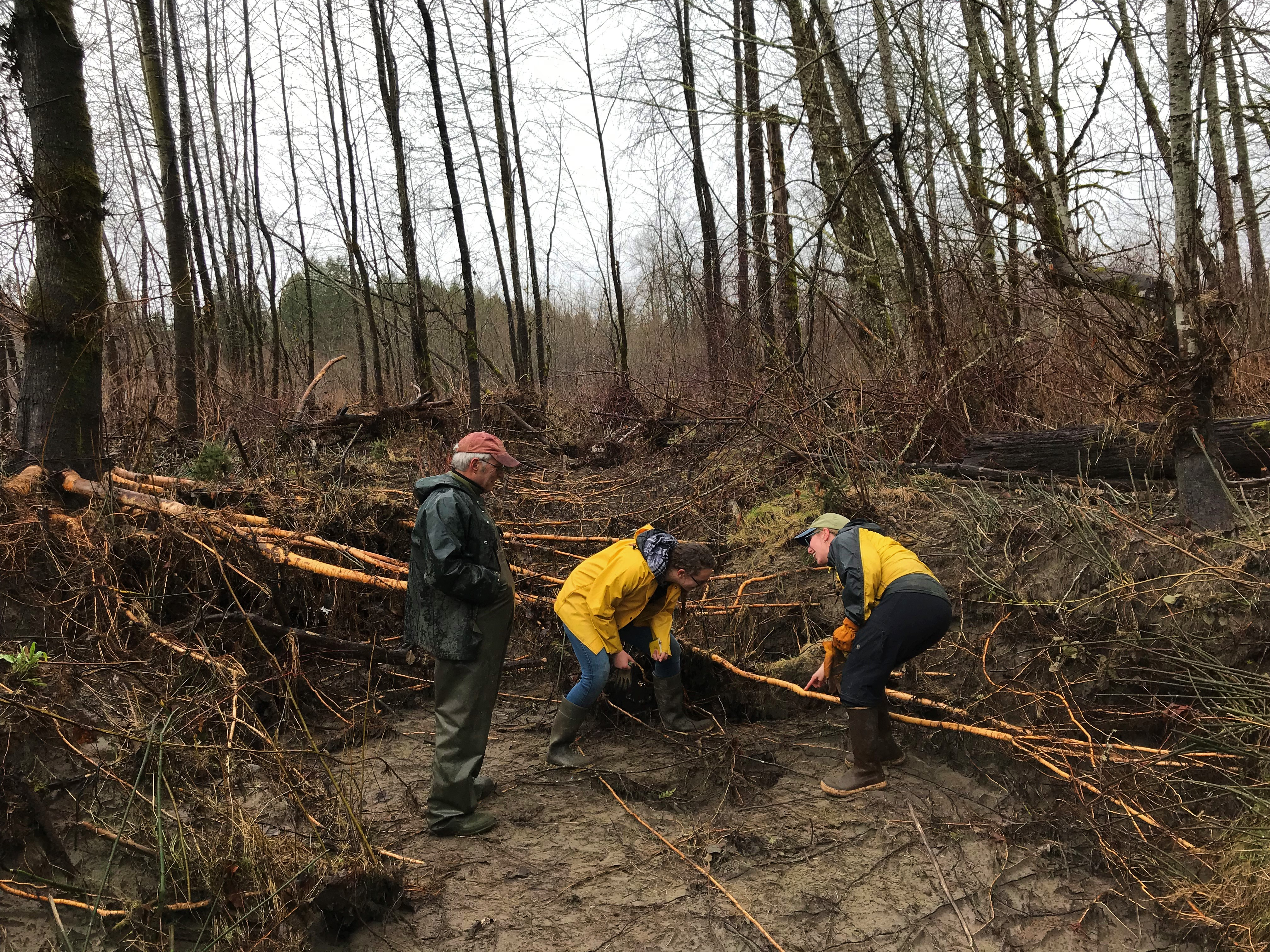 Members of the Skagit Land Trust and Skagit Fisheries Enhancement Group examine erosion from seasonal flooding at Jackman Creek Conservation Area. Photograph credit: Skagit Land Trust staff.