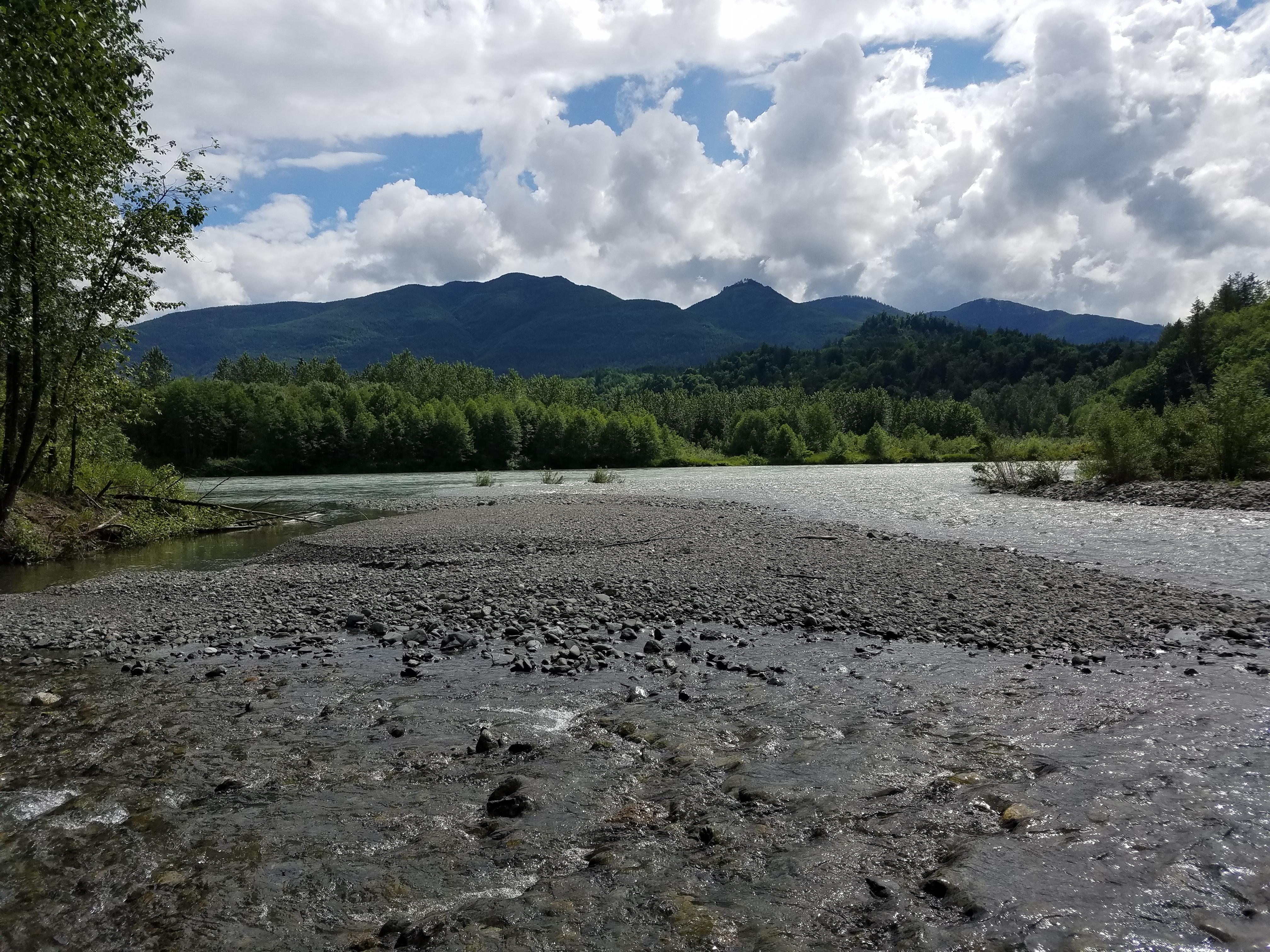 Jackman Creek Conservation Area preserves riparian habitat along the Skagit River. Photograph credit: Skagit Land Trust staff.