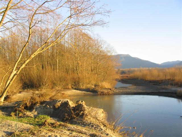 Alders and cottonwoods line Lyman Slough in the late fall. Photograph credit: Skagit Land Trust staff.