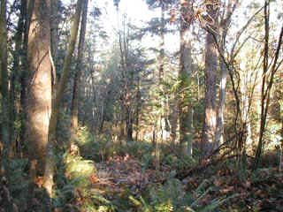 Forest at the Mehler Easement