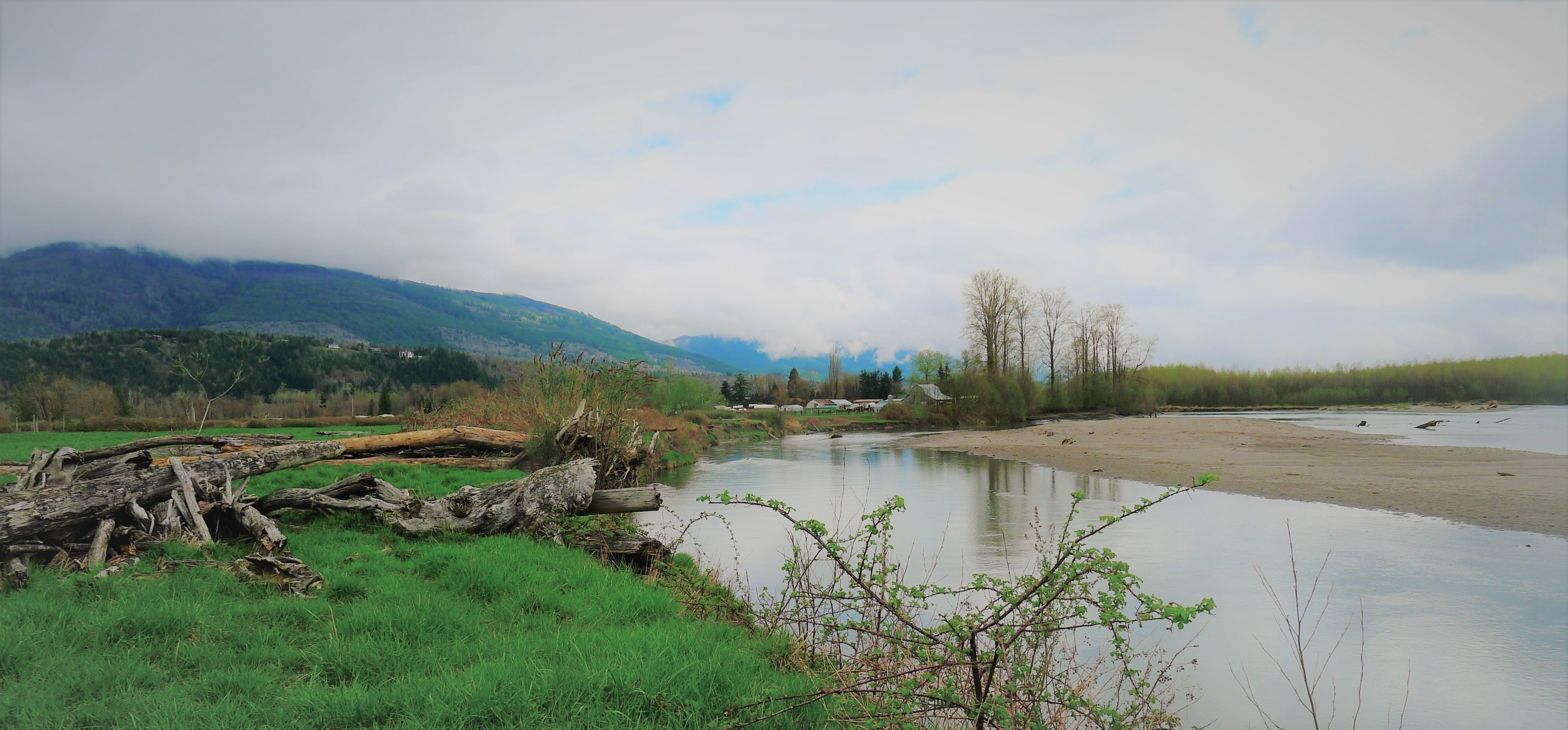 Utopia Conservation Area protects over 87 acres of creeks, wetlands and forested habitat along the Skagit River. Photograph credit: Skagit Land Trust staff.