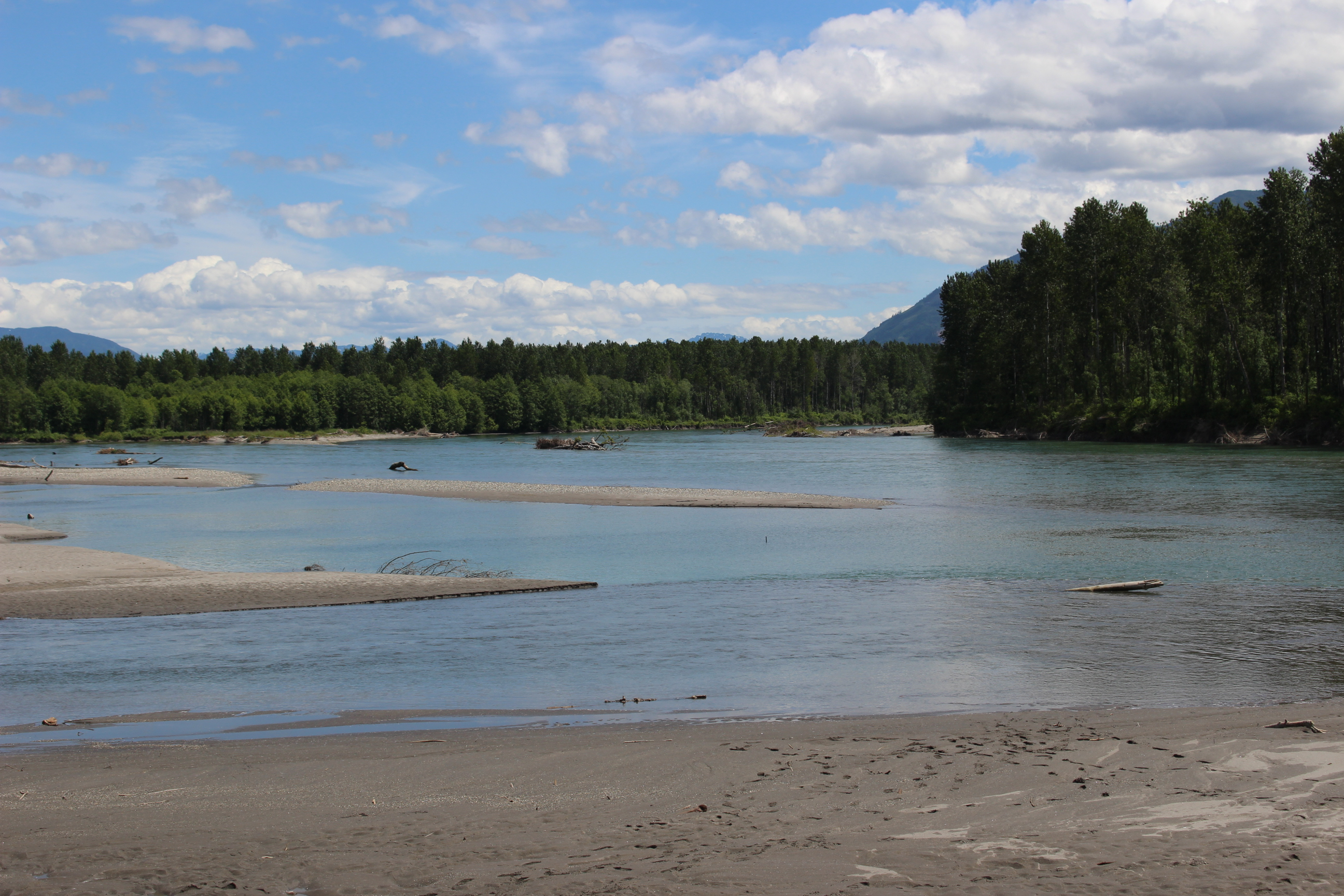 View of the Skagit River looking upstream, June 2018. Photograph credit: NCI staff.