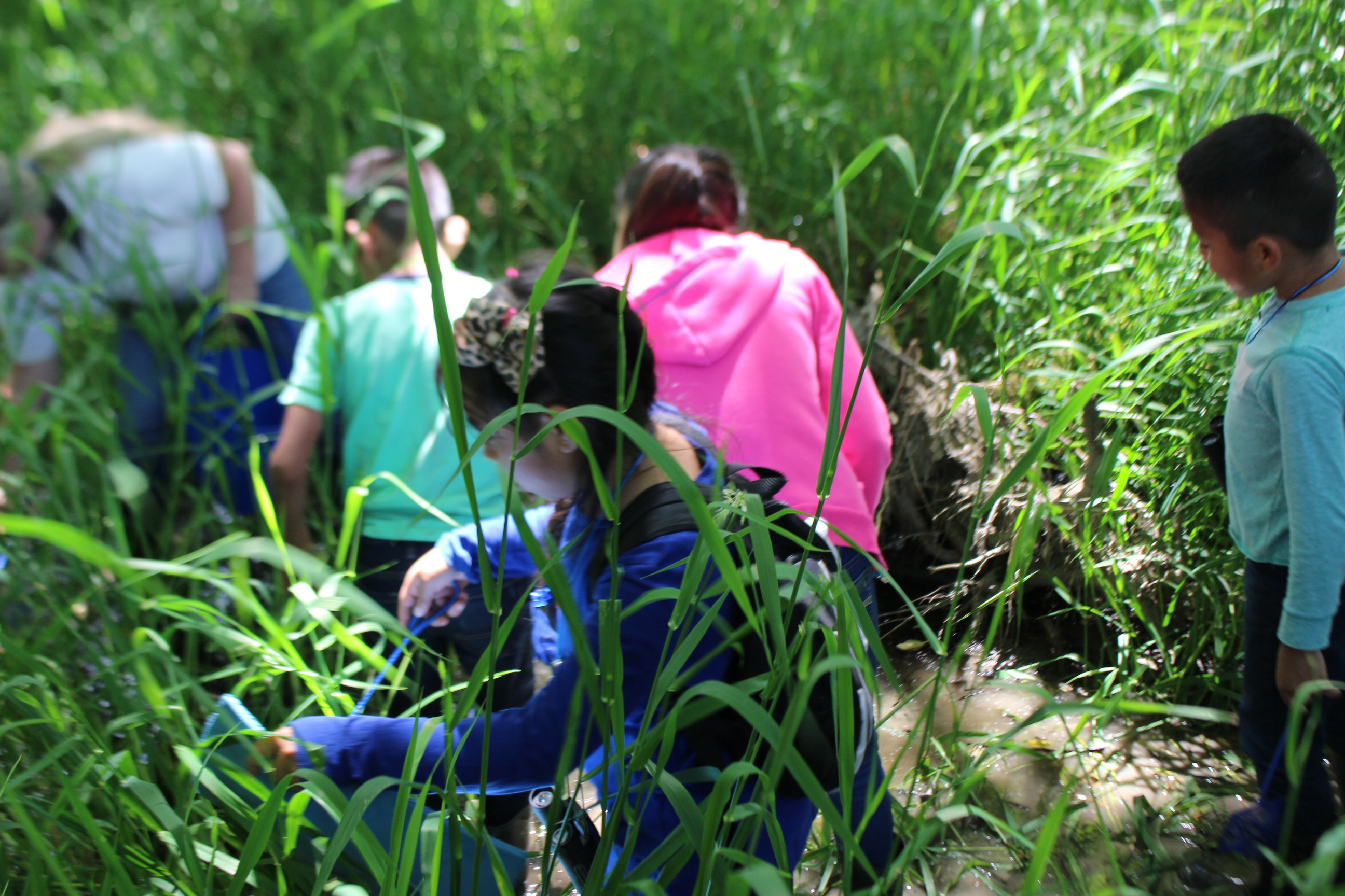 Youth in the Kulshan Creek Neighborhood program search for frogs in the wetlands of Utopia Conservation Area. Photograph credit: NCI staff.