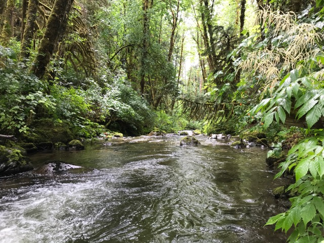 Forested slopes surround White Creek at White Creek Conservation Area. Photograph credit: Skagit Land Trust staff.