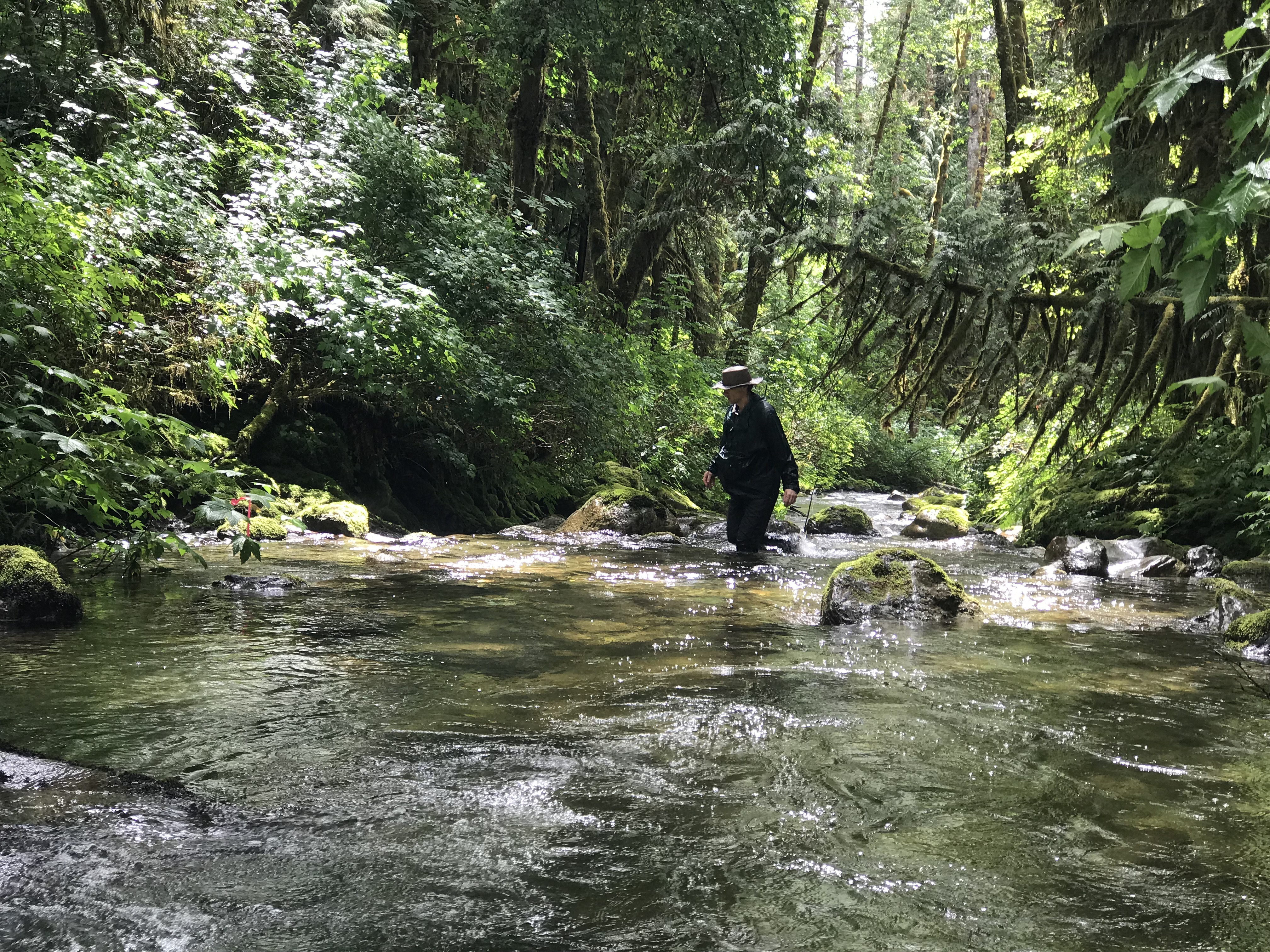 Above: Skagit Land Trust volunteer Pete Haas conducts salmon spawning surveys along White Creek at the White Creek Conservation Area in June of 2018. Photograph credit: Skagit Land Trust staff.